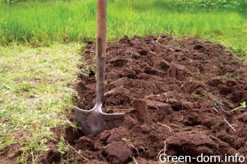 Экологические проблемы почв