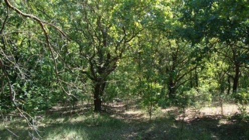 защиты лесов является