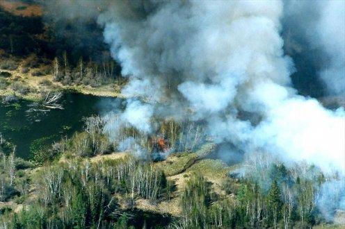 Лесные пожары являются
